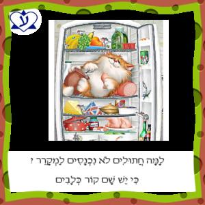 Учим полезные слова и выражения на иврите. Cобачий холод - קור כלבים