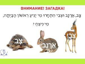 Учим иврит. Загадка про черепаху, зайца и газель